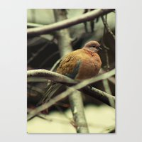 pigeon Canvas Prints featuring Pigeon by Zura