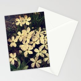 Phlox Stationery Cards
