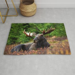 Relax Moose Rug