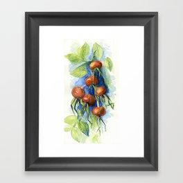 Dog-rose Berries Framed Art Print