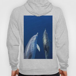 Playful and friendly dolphins Hoody