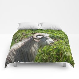 Side View of A Billy Goat Grazing Comforters
