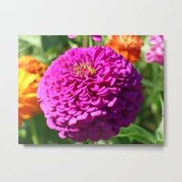 Summer Bloom Metal Print