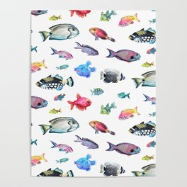 Painted Fish Poster