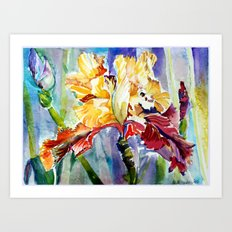 Brilliantly Iris Art Print