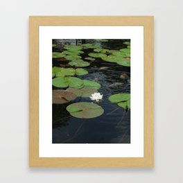 Koi and Water Lillies Framed Art Print