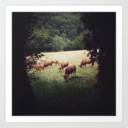 Camino Cows Art Print