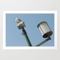 pigeon on lamp Art Print