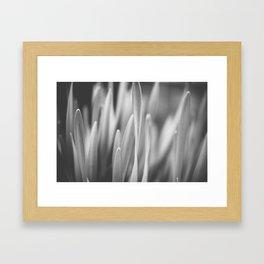 Striving Upward Framed Art Print