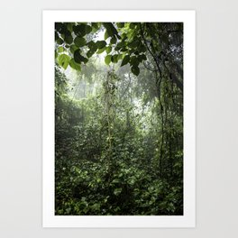 Dark Green Vines Hanging in the Misty Rainforest of Nicaragua at the Chocoyero-El Brujo Nature Reser Art Print