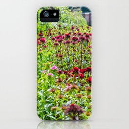 The Lost Gardens of Heligan - Sweet Williams in The Walled garden iPhone Case