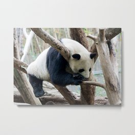 Sleepy Panda Metal Print