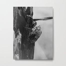 cicada shell 2016 Metal Print