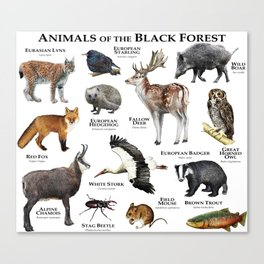 Animals of the Black Forest Canvas Print