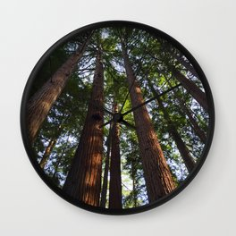 Trees! Henry Cowell State Park - California Wall Clock