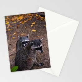 Raccons Stationery Cards