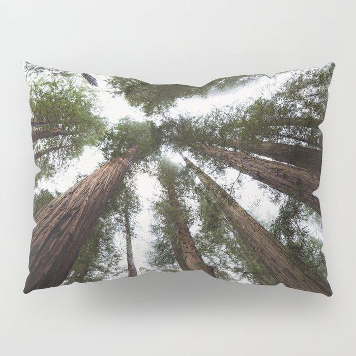 Redwood Portal - nature photography Pillow Sham