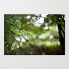 Green Goodness Canvas Print