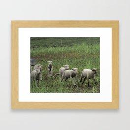 Woolgathering Framed Art Print