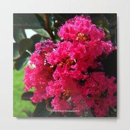 Pink Ruffles of Flowers by Jeronimo Rubio Photography 2016 Metal Print