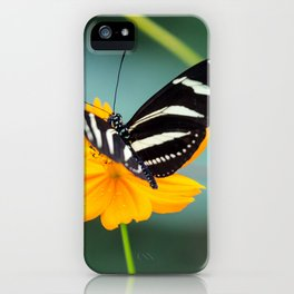 Zebra Longwing, Heliconius Charitonia, Butterfly iPhone Case