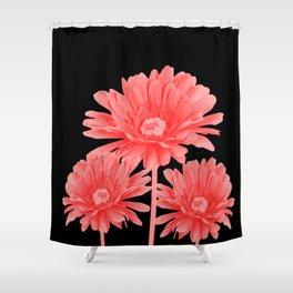3 Pink Gerbera - Black Background Shower Curtain