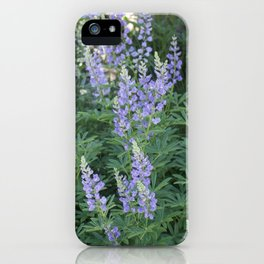 Mountain Lupines iPhone Case