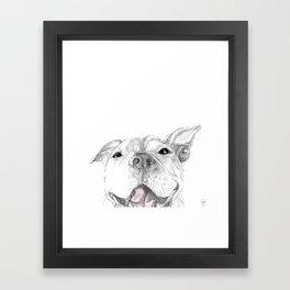 Whaddup :: A Pit Bull Smile Framed Art Print