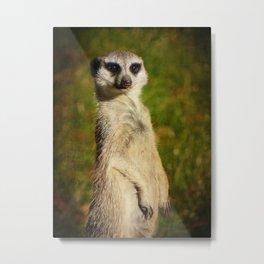 I am a model - a meerkat Metal Print