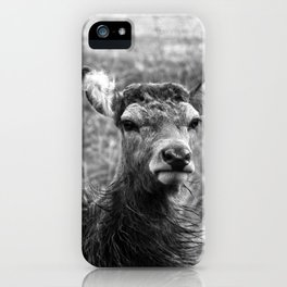 The young Highland Deer - Black and white - Loch Arkaig, Highlands of Scotland - 2019 iPhone Case