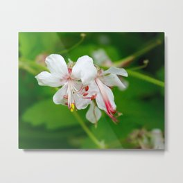 White Botanical Metal Print