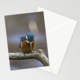 Kingfisher in the rain Stationery Cards