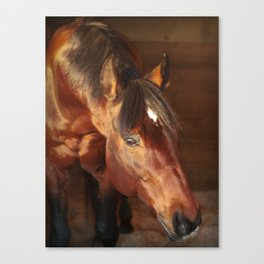 horse collection. in box Canvas Print
