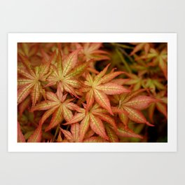 Peaches & Cream Japanese Maple Fine Art Print, Botanical Art, Leaf Texture Art Print