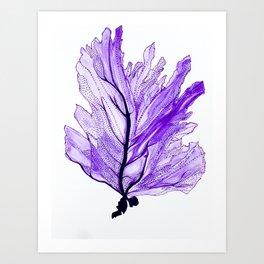 Sea Fan Art Print