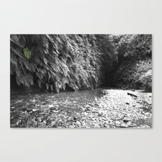 Fern Canyon Canvas Print