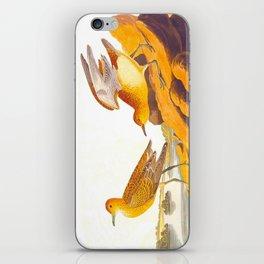 Buff-breasted Sandpiper Bird iPhone Skin