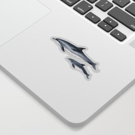 Atlantic spotted dolphin Sticker