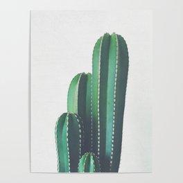 Organ Pipe Cactus Poster