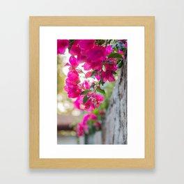 Color Bugambilia Framed Art Print