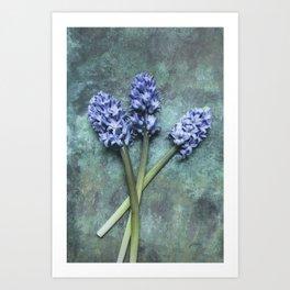 Beautiful Hyacinth Art Print