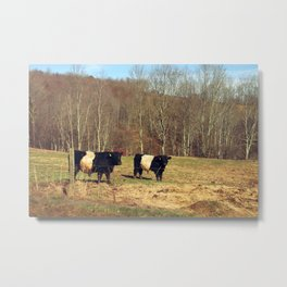 Two Oreo Cows on the Hill, Staring at You Metal Print