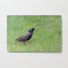 Colourful bird Metal Print