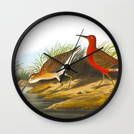 Pigmy Curlew Bird Wall Clock