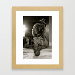Primped and Groomed Framed Art Print