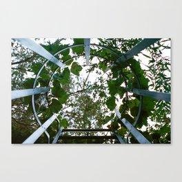 Urban Vines Canvas Print