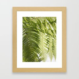 House Plant Fern Leaf Silhouette Sunlight Zen Photo Framed Art Print