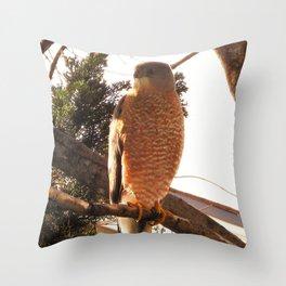 Al the Cooper's Hawk Throw Pillow
