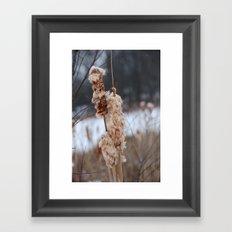 Cattail Framed Art Print