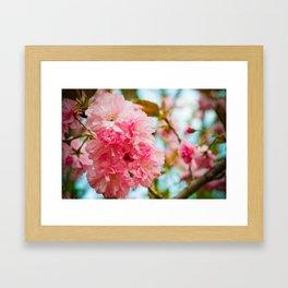 Pink Blooms (1) Framed Art Print